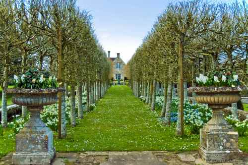 Spring bulbs at Piddle Hall