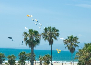 kites flying over Venice beach