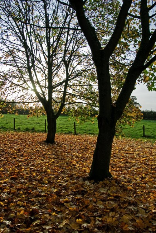 perfect autumn day in dorset